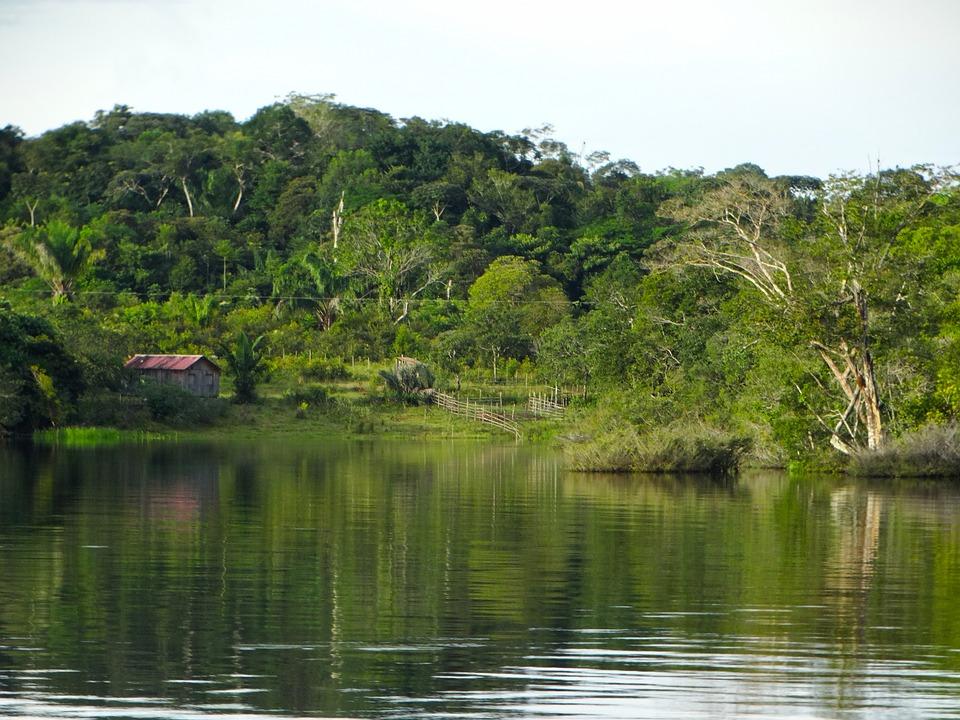 Amazonegebied brazilie