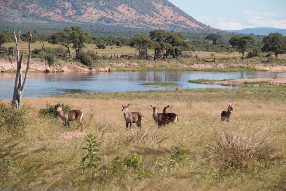 Ruha National Park