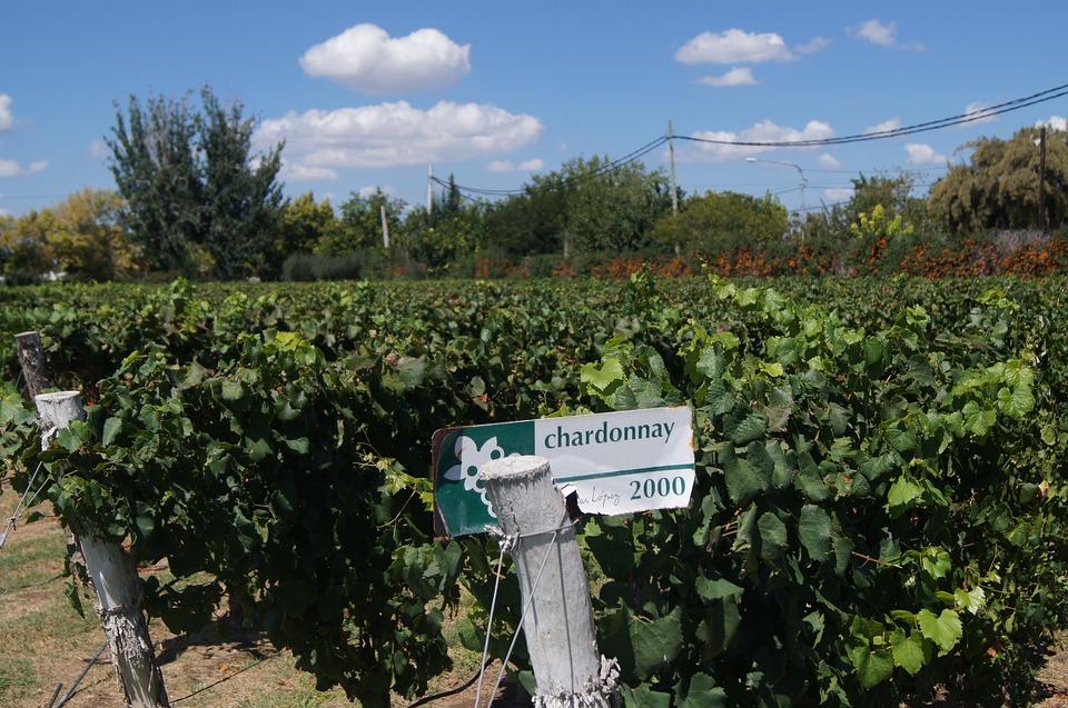 wijngaarden Mendoza