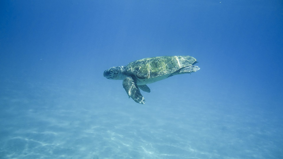 schildpadden zakynthos